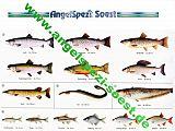 Fisch Erkennungskarten Komplettsatz NRW
