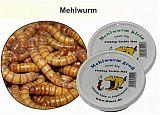 Mehlwürmer - groß - 30g PVC Dose