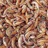 Koi Futter, Shrimps, 1 Liter